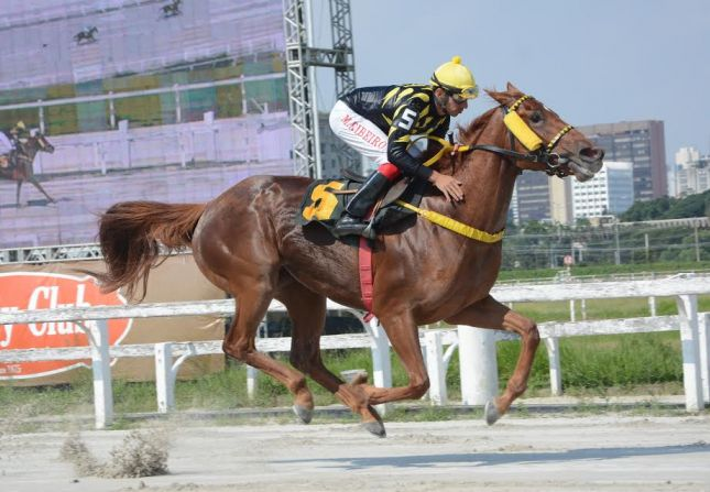 Friends of Gold acusa sobras em listed race paulista